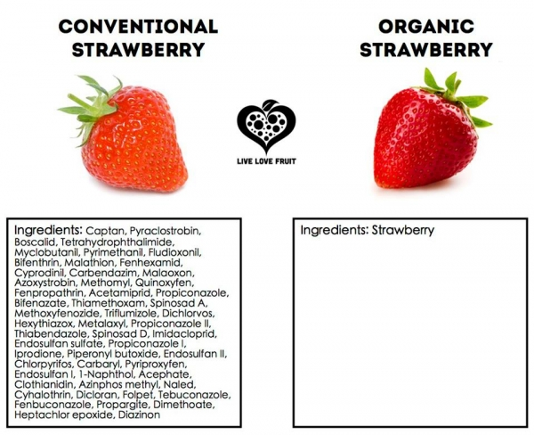 Strawberries : a fruit with one of the highest pesticide levels.