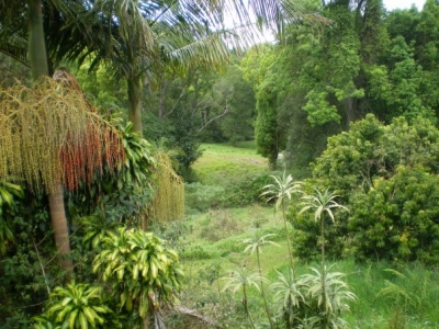 View of our beautiful farm in Bangalow among rainforest and not far from the famous surfing beaches of Byron Bay.