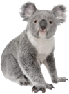 We will help in the fight to save the Australia Koala